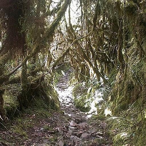 דרך היער
