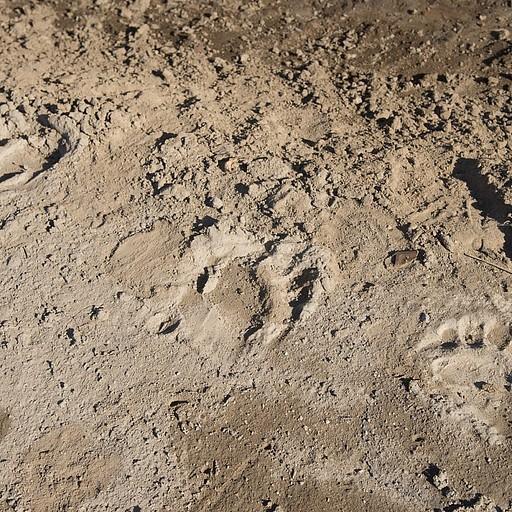 עקבות הדובים הראשונות שפגשנו