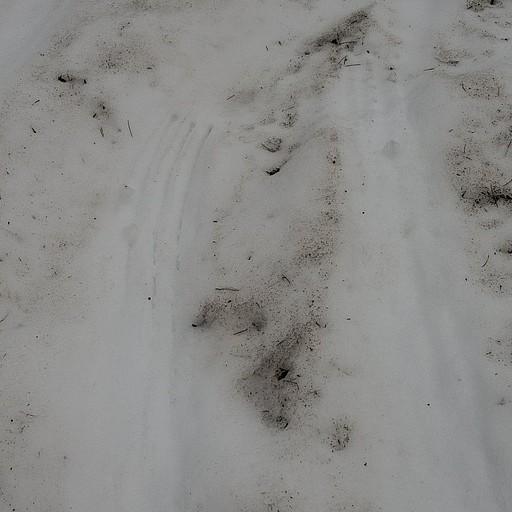 סימני דובים מחליקים בשלוגית