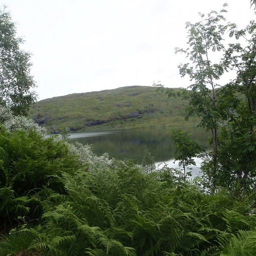 ההליכה לצד האגם
