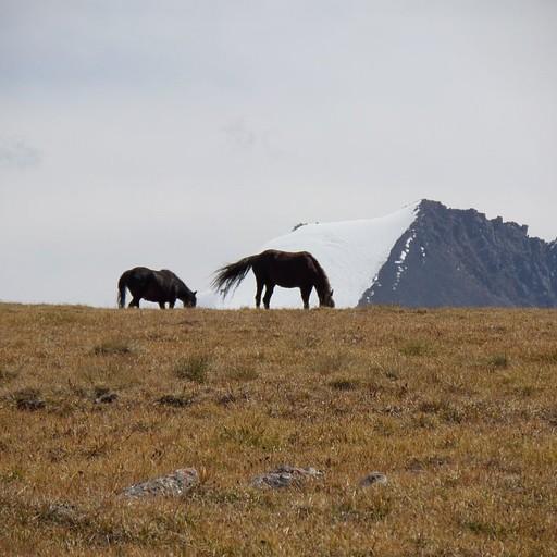 סוסי פרא באזור מבודד דרומית לתמוה ואגם איסיקול
