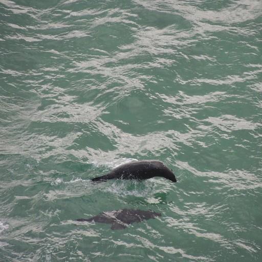 מושבת כלבי ים ברוברג