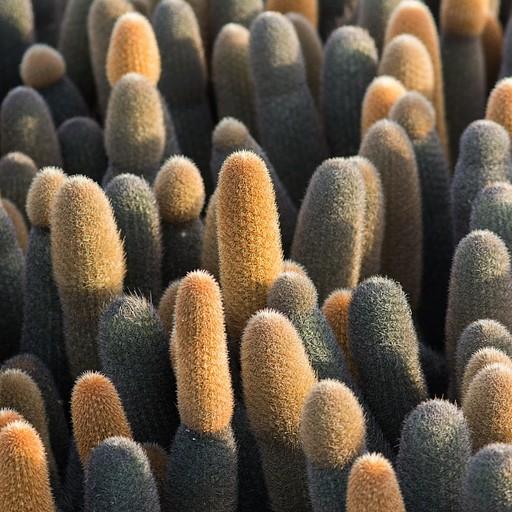 Cactus ייחודי לגלאפגוס