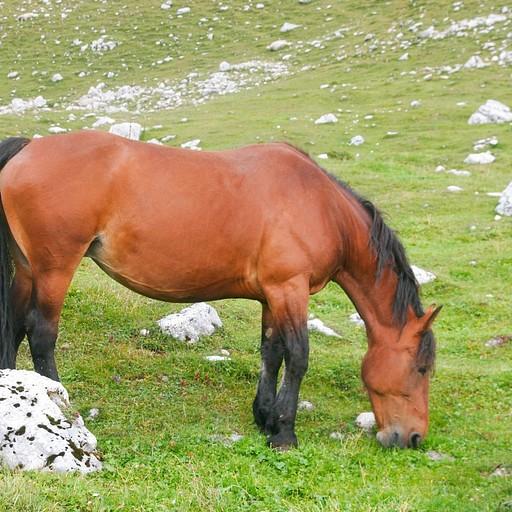 סוסים בריאים! יאמי!
