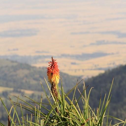 הנוף מTulu gudemsa היום השני