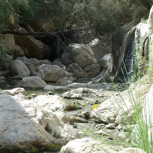 מעינות לאורך הנחל