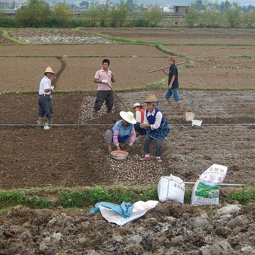 מקומיים מעבדים את האדמה סביב האגם