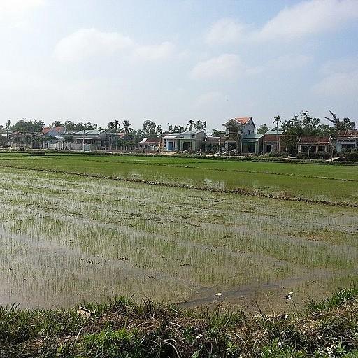 שדה אורז בדרך למי סון