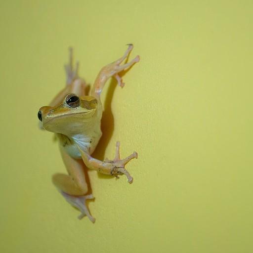 צפרדע במקלחת שלנו