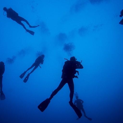 צוללים במים כחולים בזריחה ומחכים לפטישנים (שלא הגיעו)