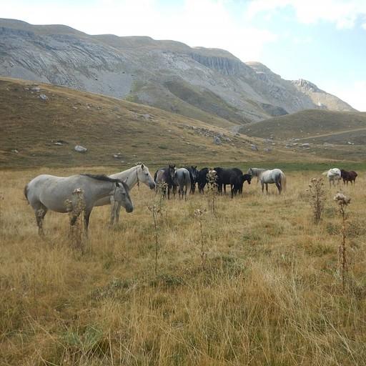 עדר הסוסים בעמק בין הרפיוג'י לאגם