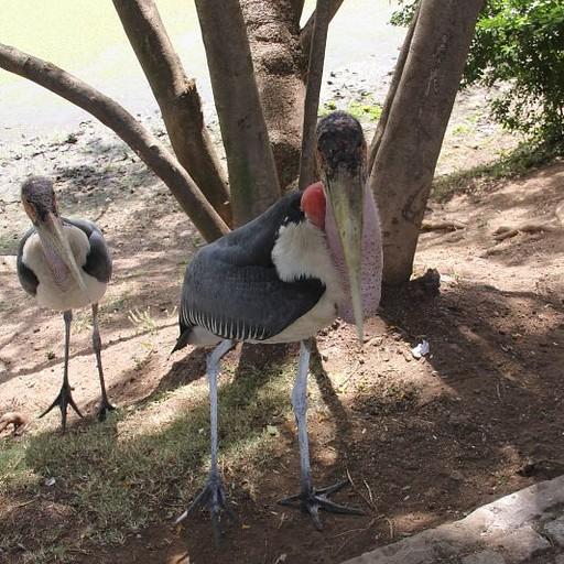 ציפור על האגם באווסה