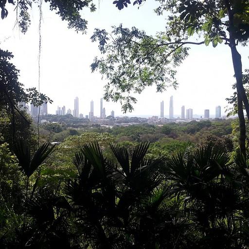 העיר פנמה סיטי כפי שהיא נראית מפארק מטרופוליטן