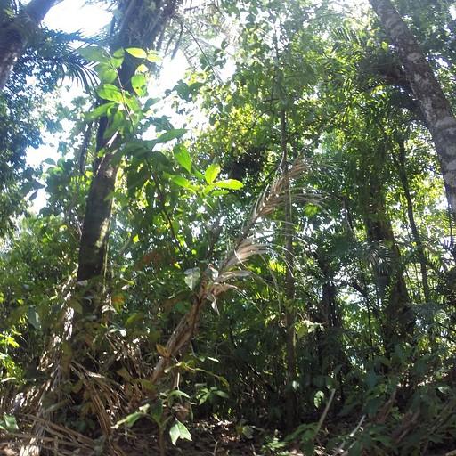 פארק לאומי מנואל אנטוניו