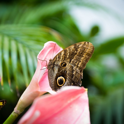 מוזיאון הפרפרים
