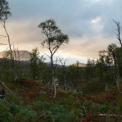 היער לקראת סוף היום
