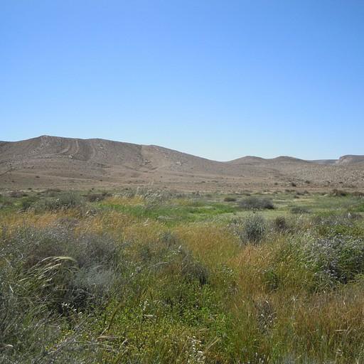 ירוק של גליל במדבר