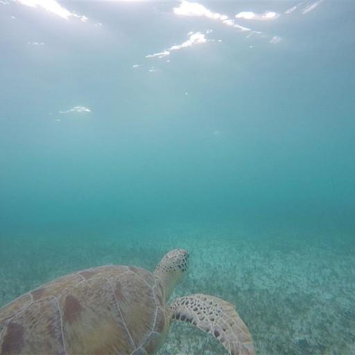 (Akumal) -חוף הצבים 3