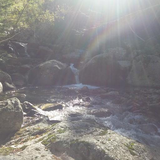 3. הנחל בעקבותיו הולכים אחרי שהשביל הופך ללא מסומן נמצא בתוך יער צפוף ויפה