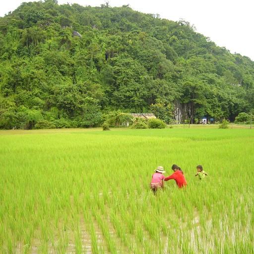 ילדים מחפשים דגיגים למאכל בשדות האורז שבפאתי קמפוט.
