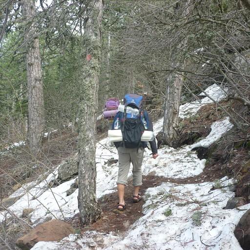 השביל עובר בין שלוגיות שנשארו מהחורף