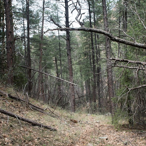 העלייה בתוך היער