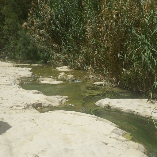 זרימה בנחל ערוגות