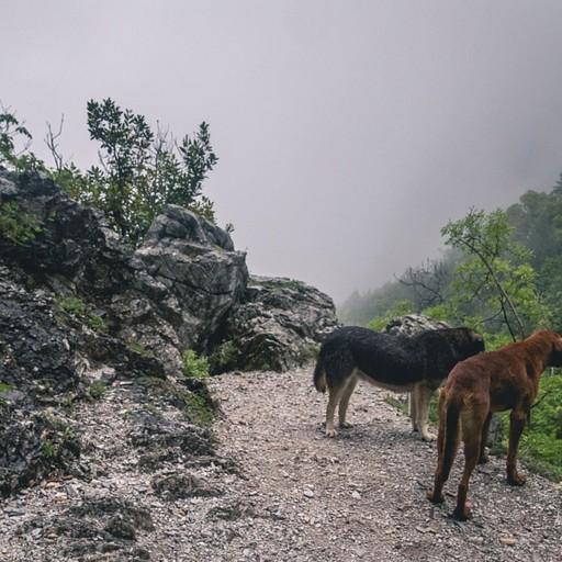 שני הכלבים שליוו אותי רוב הדרך לפריוניה