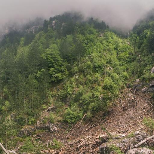 באזור זה כנראה היתה מפולת של בוץ או שלגים, והעצים נעקרו ממקומם. זה היה מראה מוזר ויפה