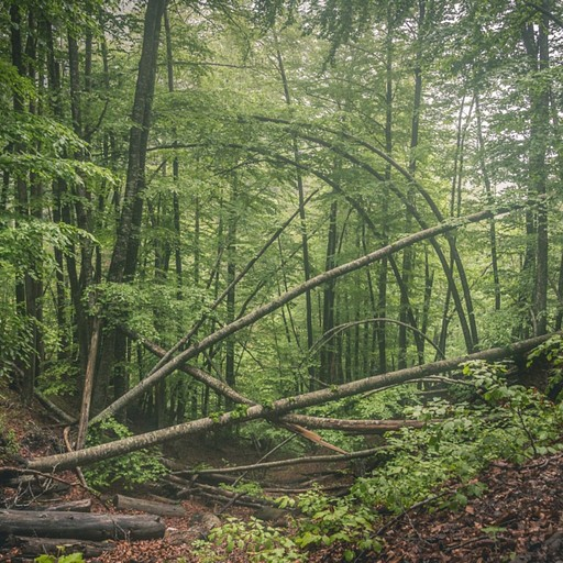 בתוך היער בדרך העולה לרפיוג'