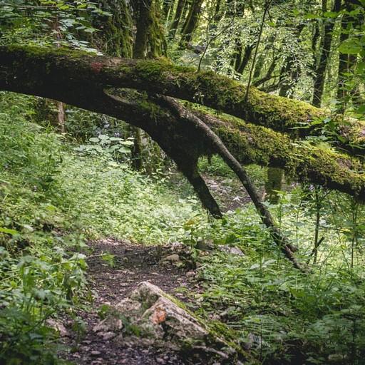 הדרך בקניון ויקוס עוברת בתוך יער סבוך. כאן ניתן לראות עץ שנפל וחסם את השביל. לא יוצא דופן למסלול זה.