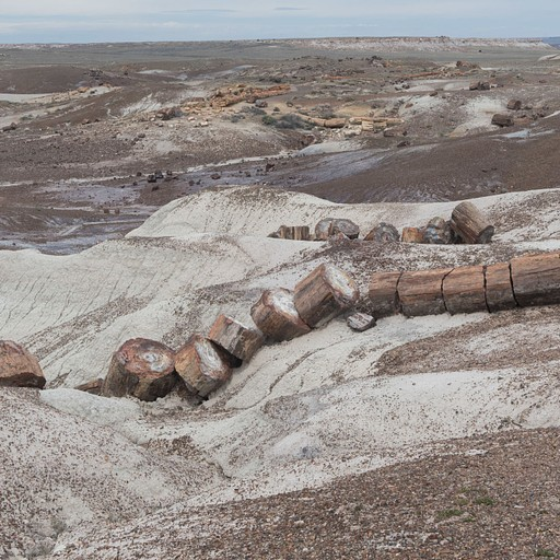Petrified Forest NP, אריזונה