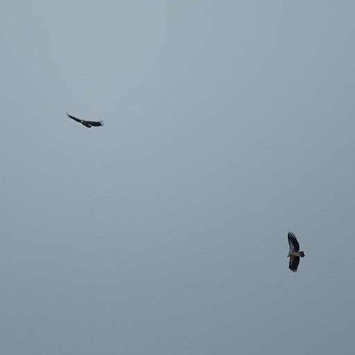 עופות דורסים רבים לאורך כל הדרך