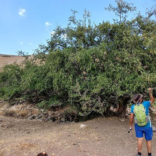 עץ שיזף