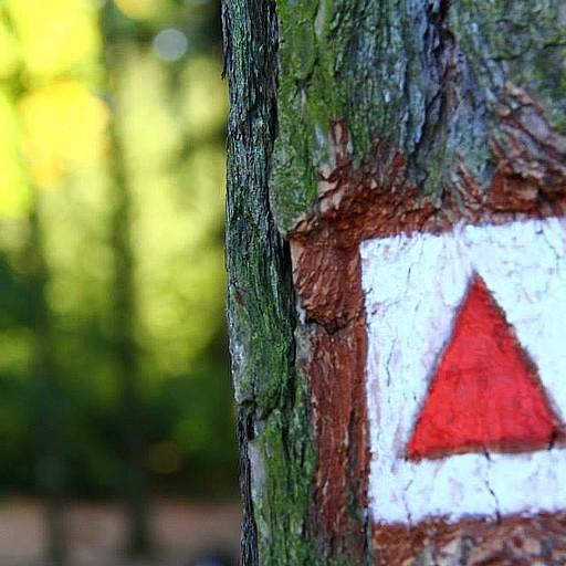 סימוני השבילים על העצים בפארק