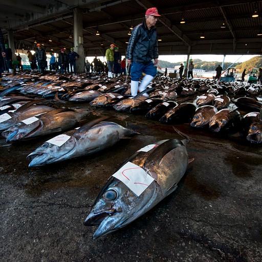 שוק הדגים ב- Katsura