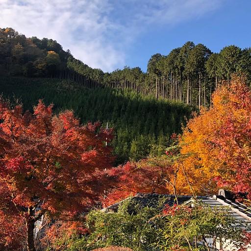 תחילת העליה בטיול באזור Mitake