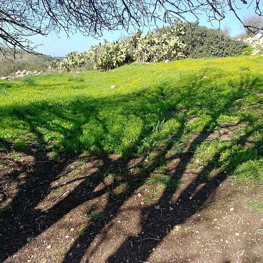 העץ ליד פיצול השבילים ירוק \ כחול