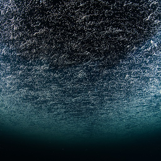 Coral Spawning על פני המים בלילה