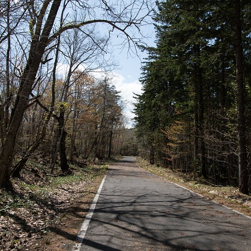 הדרך שבין הכביש החסום לתחילת השמורה