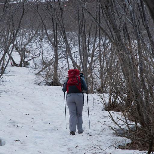 השביל מכוסה בשלג