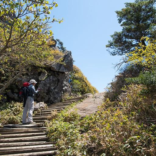 המדרגות המובילות לפסגה