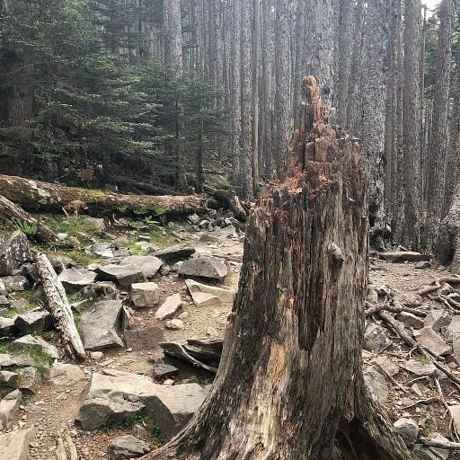 היער אחרי בקתה 369