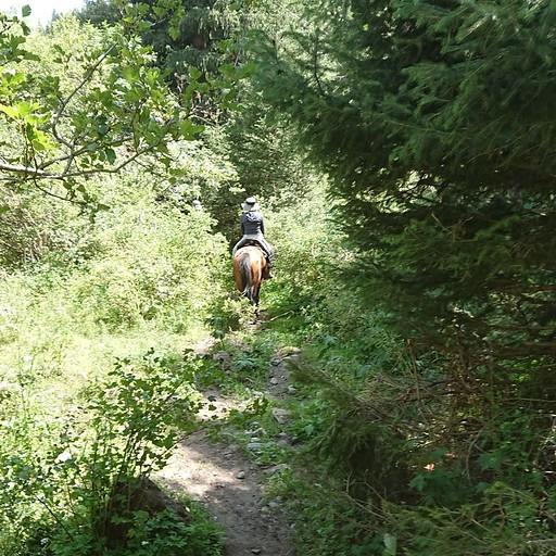 הליכה בין העצים בתוך השמורה