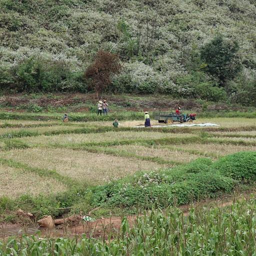 בצידי הדרך בטרק הכול מלא בשדות חקלאיים