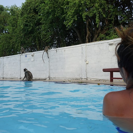 אורחים בבריכה
