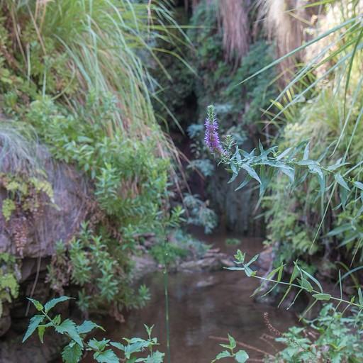 פינה טרופית בנחל זרד