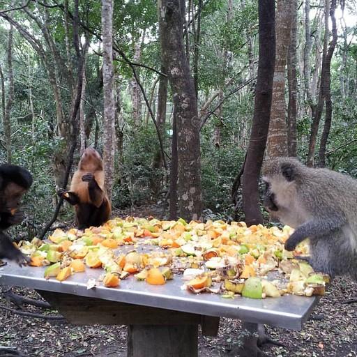פארק הקופים