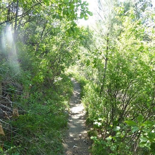 השביל בתוך היער