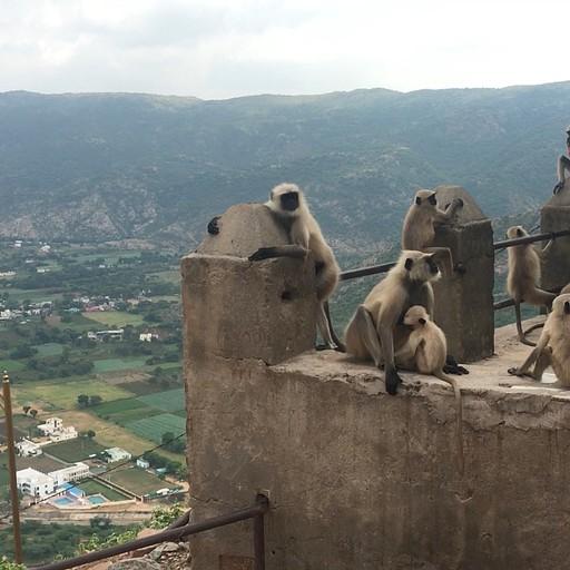 מקדש הקופים